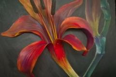 Czarodziejski kwiat